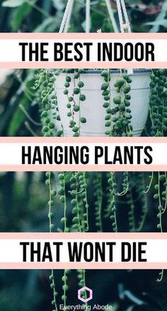 Best Indoor Hanging Plants, Plants For Hanging Baskets, Hanging Succulents, Succulent Plants, Hanging Plant Diy, Indoor House Plants, House Plants Hanging, Inside Plants, Cool Plants