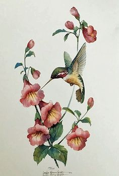 Little Hummer IV is a lithograph licensed from an original watercolor by Carolyn Shores Wright. The image is one many hummingbirds and flowers she has painted over the years. Watercolor Flowers, Watercolor Paintings, Hummingbird Drawing, Bird Drawings, Beautiful Birds, Flower Art, Instagram, Salvia, Prismacolor