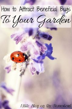How to Attract Beneficial Insects to Your Garden - http://www.littleblogonthehomestead.com/beneficial-insects/
