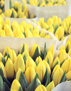 La Vuelta al mundo: Búsqueda del Tesoro 2019 content tagged with amarillo Spring Colors, Spring Flowers, Spring Green, Yellow Cottage, Yellow Springs, Yellow Tulips, Lemon Yellow, Mellow Yellow, Growing Plants