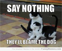 Ssssssstttt  Keep #dogs and #cats healthy, learn everything about #pet health here