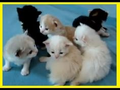 CAT ♥ BABY CATS COMPILATION 1 ► DONT MISS ◄    http://www.youtube.com/watch?v=0FKNsZzoiqc