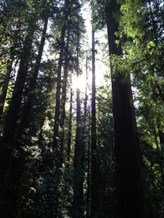 Armstrong Redwoods State Natural Reserve--Hikes vary from 1 to 9 miles with varying levels of difficulty. $8 per vehicle