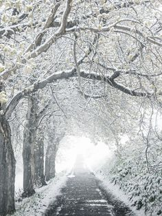 ***Under the snowy trees by Nicholas Yee (Edmonton, Alberta, Canada) I Love Snow, I Love Winter, Winter Snow, Winter White, Landscape Photography, Nature Photography, Snowy Trees, Winter Trees, Winter Scenery