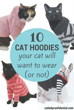 10 cool hoodies for cats