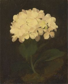 Stuart Park - White Hydrangea - Google Art Project - Category:Hydrangea in art - Wikimedia Commons