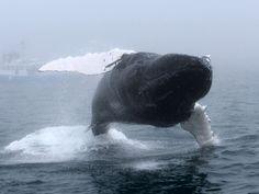 Photo Gallery - Mariner Cruises Whale Watching Adventure Tours on Brier Island, Nova Scotia