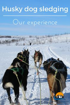 Our husky dog sledging experience in the Arctic wilderness - The Curious Explorers