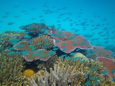 The Great Barrier Reef is the world's largest coral reef system. It's located in the Coral Sea, off the coast of Queensland, Australia. It's so large, you can see it from outer space. The reef is a very popular destination for scuba divers and other tourists.