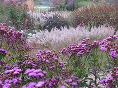 Piet Oudolf   Pensthorpe Millennium Garden