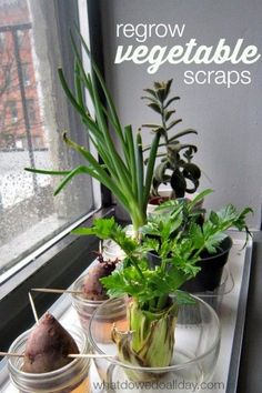 Introduce plant science to kids by regrowing vegetables indoors! What a fun idea.
