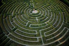 France :  Le plus grand labyrinthe végétal du monde à Reignac-sur-Indre, Indre-et-Loire,