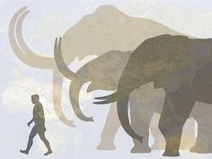 wooly mammoth drawing - Google Search