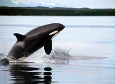 Whale Watching Tour - A Million Cool Things to Do Seattle