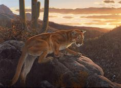As Darkness Falls - cougar - puma - mountain lion - painting by Al Agnew