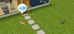 There's a Kitten at my hours with the lost puppy