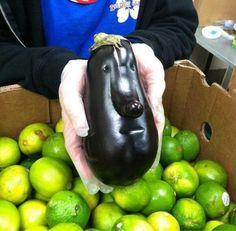 Cool eggplants