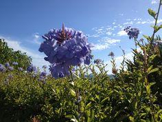 Madeira botanische tuinen