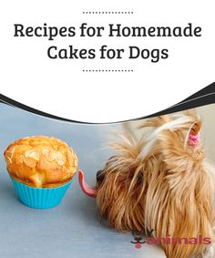 Recipes for Homemade Cakes for Dogs  Animals love sweet things, but we all know that sugar is harmful to their health. Do you want to treat your pet? So do we! That's why we are sharing this article containing some of the best recipes for homemade cakes for dogs on the world wide web!