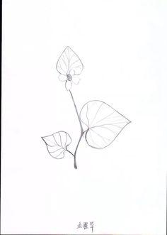Sketch_Houttuynia cordata_09