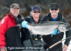 It's Tyee-mania at Peregrine! Naden Harbour keeps producing the monster Chinook salmon.