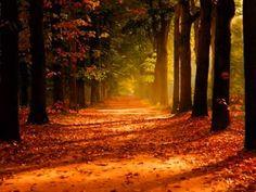 今朝はバタバタしていてだいぶ遅くなってしまいましたが、おはようございます。 この週末はタイムラインにあちこちの鮮やかな紅葉の写真が流れています。私はいろいろ立て込んでいて、自宅にこもっているので残念ですが、代わりに今朝の一曲は鮮やかな紅葉の映像とともに、ミシェル・コロンビエ作曲による悲しい名曲「エマニュエル」。 トランペットの貴公子クリス・ボッティとルチア・ミカレリィの協演。ルチアは6歳にしてホノルル交響楽団と協演したという神童ヴァイオリニスト。ロックバイオリニスト!とも言われたりしますが、この曲はしっとりと演奏していて、いいですねー