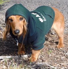 Adopt Don't Shop Hoodie in Forest Green!  20% donated to no-kill shelters and rescue organizations. www.wonderdogapparel.com #adoptdontshop #rescue #hoodie