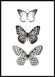 Black and white poster with butterflies Stylish posters online desenio.nl - Black and white poster with butterflies Stylish posters online desenio. Illustration Papillon, Butterfly Illustration, Butterfly Drawing, Black And White Posters, Black And White Prints, White Art, Black Art, Black White, Art Papillon