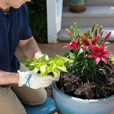 How to Plant a Conta