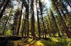 TRAVEL'IN GREECE I Valia Calda forest, #Grevena, West Macedonia, #Greece, #travelingreece