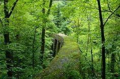 Secret forest bridge.