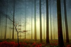 This morning! by Patrice Thomas on 500px