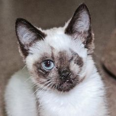 Noon is available for adoption at our Mission campus!! She is a complete cuddlebug.