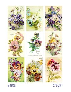 Digital Clipart, Instant Download, pansy pansies flowers floral bouquet johnny jump up, purple pink yellow--digital collage sheet 1202