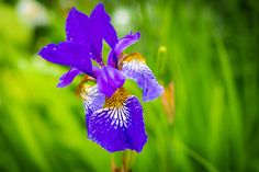 Flower by Catalin Petre - Photo 307849773 / Landscape, Flowers, Plants, Scenery, Plant, Royal Icing Flowers, Flower, Corner Landscaping, Florals