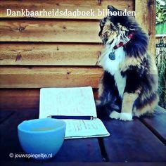 Een dankbaarheidsdagboek bijhouden helpt je gelukkiger te zijn. Het is ook heel behulpzaam bij het beoefenen van the Law of Attraction. De poes op deze foto zit voor een handgeschreven dagboek.