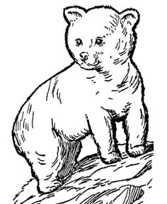 Big Coloring Pages Of Animals | Wild Animal Coloring Pages | Young Bear Cub Coloring Page and Kids ...