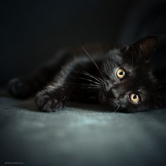 love black kitties - and they're the last ones adopted at shelters!  please consider an all black cat...