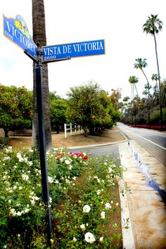 The beautiful Victoria Avenue