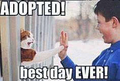 Save a life... Adopt a pet!