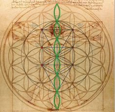 "Adventures in geometric phenomenon. The classic Davinci ""Vitruvian Man"" contrasted with the flower of life, the mercaba, and a 7th octave waveform. I was using this imagery today to explain..."
