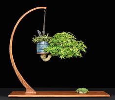 Bonsai display tables are used to highlight the importance of a bonsai tree in exhibits. Modern or traditional they all have the same purpose - show off the bonsai! Bonsai Tree Care, Indoor Bonsai Tree, Bonsai Plants, Bonsai Garden, Bonsai Trees, Mini Bonsai, Indoor Garden, Garden Art, Indoor Plants