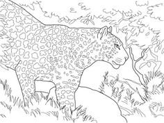 Leopard Entering Forest Coloring Page : Coloring Sky Forest Coloring Pages, Colouring Pages, Coloring Sheets, Coloring Pages For Kids, Animal Templates, Online Coloring, Snow Leopard, Animal Drawings, Moose Art