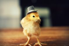 @Jennifer Fortwengler - I know how you feel about hats on babies, but what about hats on baby chickens? ;)