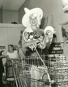 Jayne Mansfield (above) shopping in Las Vegas, in a dinky corner store, with her chihuahuas for company. [Photo by Bruno Bernard, Bernard of Hollywood]