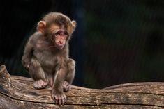 Monkey, Bebe, Animaux, Jumpsuit, Monkeys, At Sign
