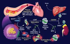 Healthy Cholesterol Levels - http://www.kemsat.com/healthy-cholesterol-levels/