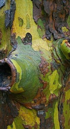 Green bark by junglejims photos Patterns In Nature, Textures Patterns, Palette Verte, Wallpaper Texture, Art Texture, Nature Tree, Tree Forest, Tree Bark, Natural Texture