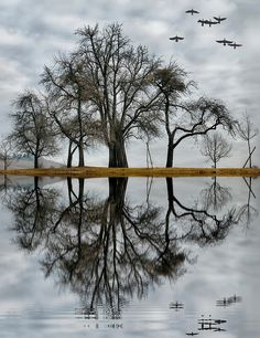 Tree reflections and nature Reflection Photography, Nature Photography, Beautiful World, Beautiful Images, Water Reflections, Amazing Nature, Belle Photo, Pretty Pictures, Serenity