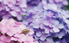 snail pictures to download, 260 kB - Haines Mason